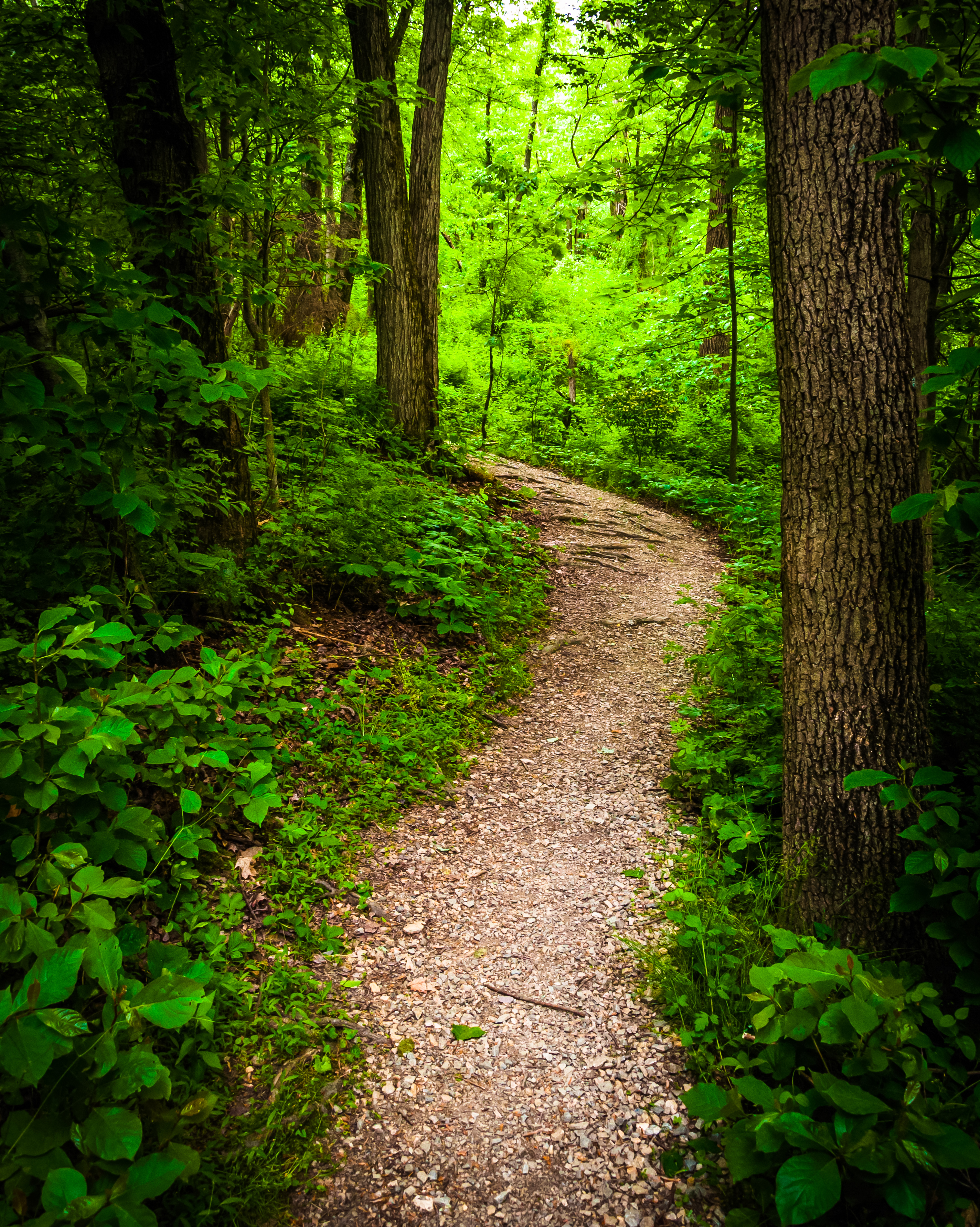 Trail through lush green forest in Codorus State Park, Pennsylvania